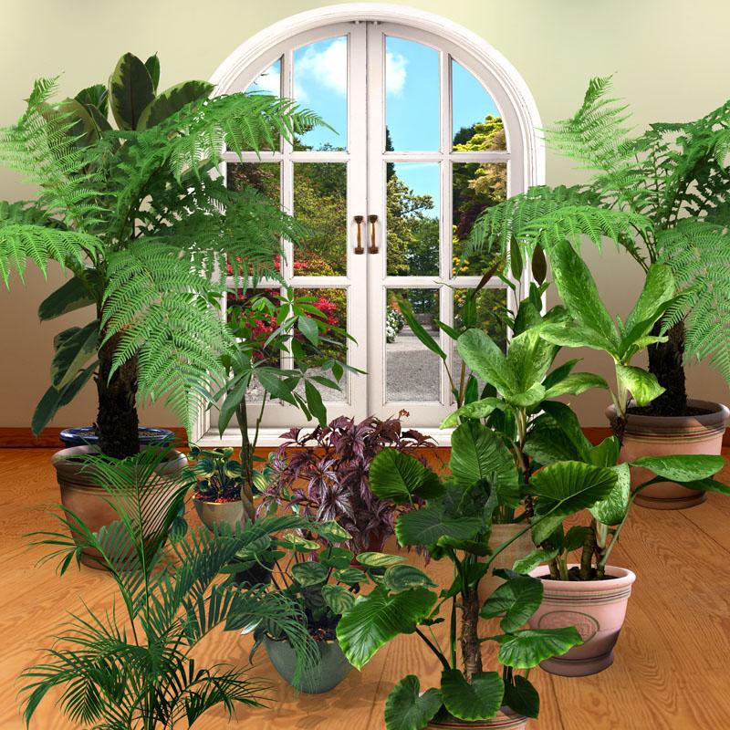 Фотошпалери 3d французьке вікно рослини