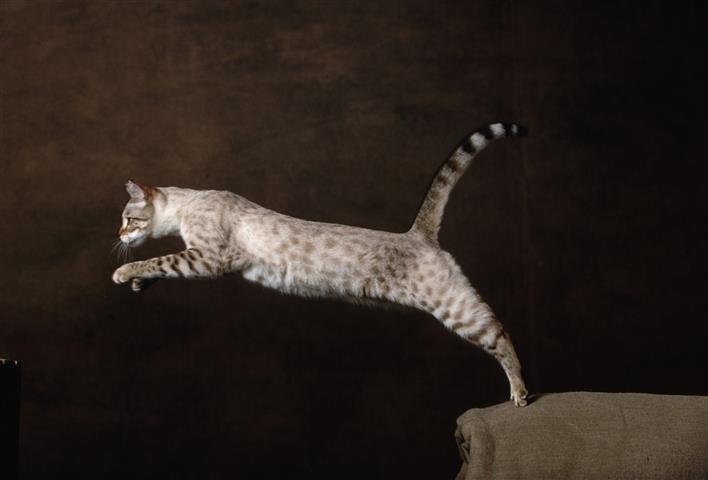 Фотообои животное кошка кот фауна
