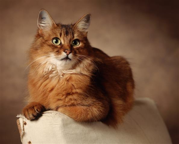 Фотообои животное кот кошка пушистый