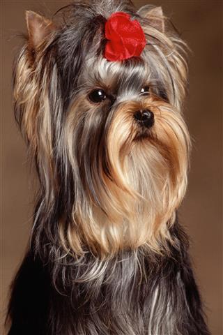 Фотошпалери тварина собака свійський улюбленець