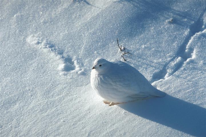 Фотообои птица голубь дикий белый