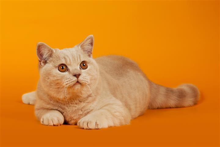 Фотообои животное кот кошка домашний