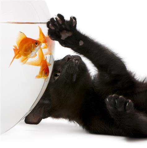 Фотообои животное кот рыбки кошка