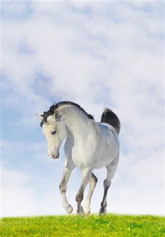 Фотошпалери тварина кінь кінь вузький