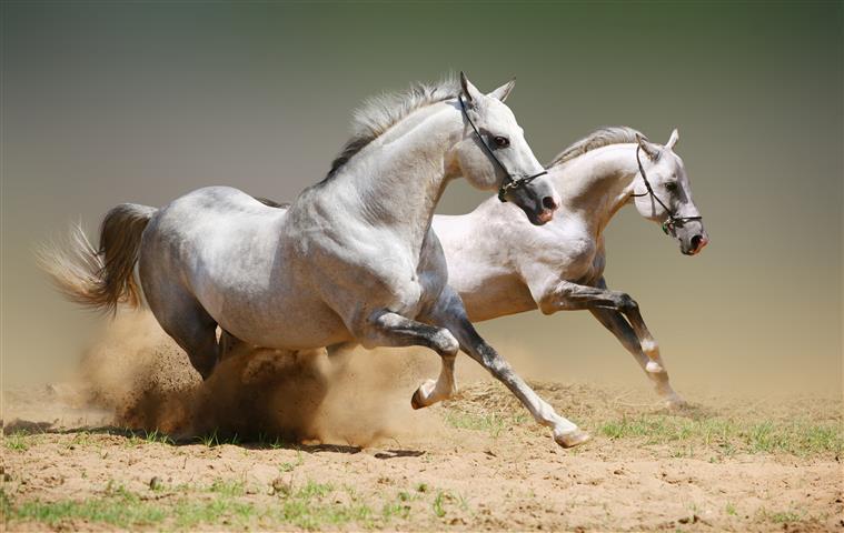 Фотообои животное лошадь конь скакать