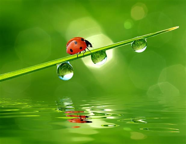 Фотообои насекомое божья коровка листик капля