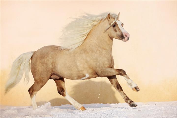 Фотошпалери тварина, кінь, кінь, скакати
