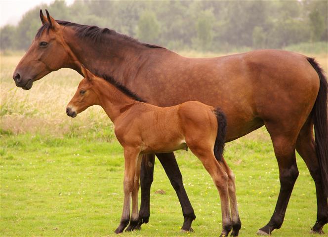 Фотообои животное лошадь конь жеребенок