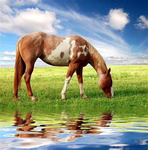 Фотообои животное лошадь конь пастбище