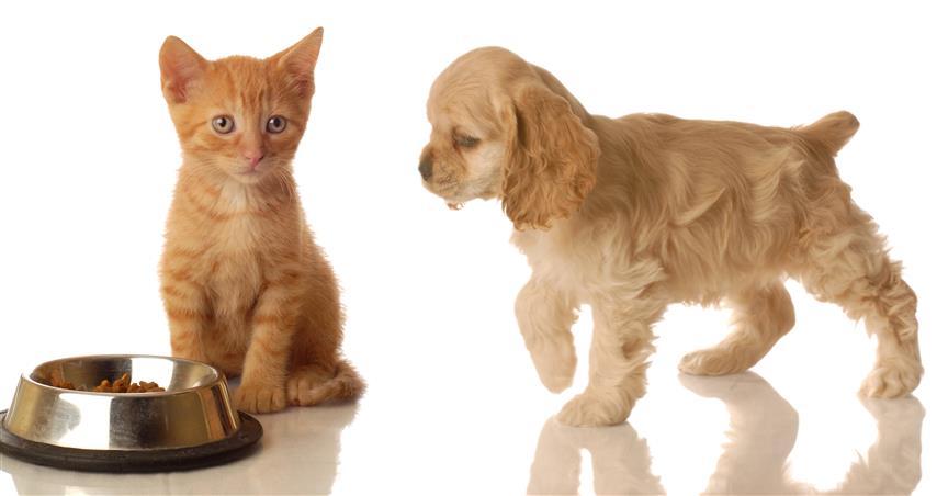 Фотообои животное собака кошка миска