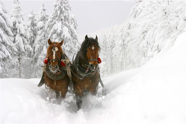 Фотошпалери сніг кінь пара скакати