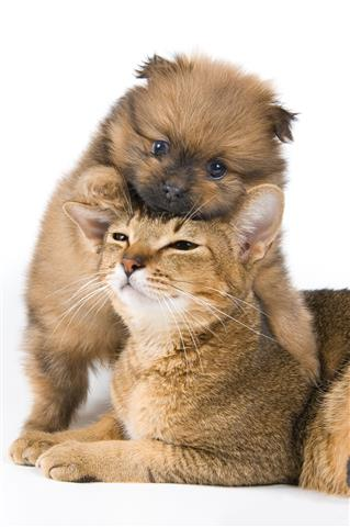 Фотообои щенок собака кошка любовь