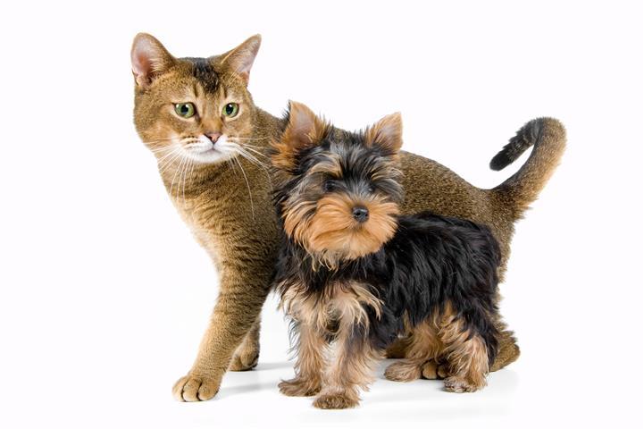 Фотошпалери тварина собака кішка кохання