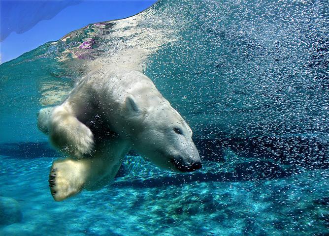 Фотообои вода медведь вода белый