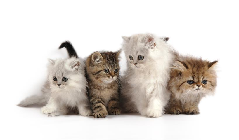 Фотошпалери тварина кішка кошеня кошеня