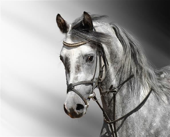 Фотошпалери тварина кінь кінь фауна