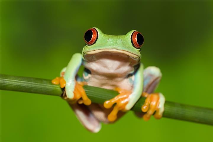 Фотообои лягушка жаба зеленый земноводное