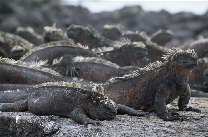 Фотошпалери плазуни дикий дикий земноводне