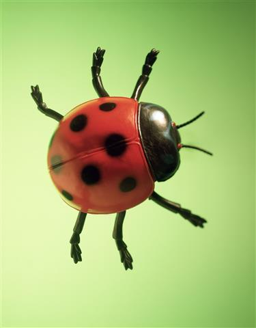 Фотообои насекомое красный красный зеленый