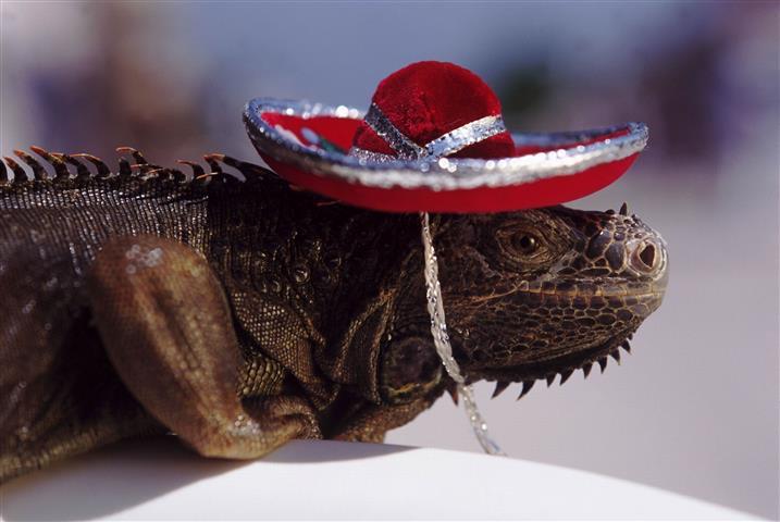 Фотообои рептилия земноводное земноводное шляпа