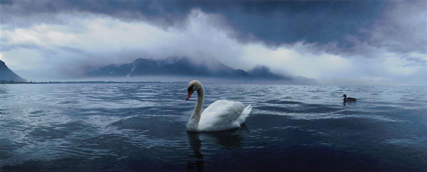 Фотообои туман море море фауна