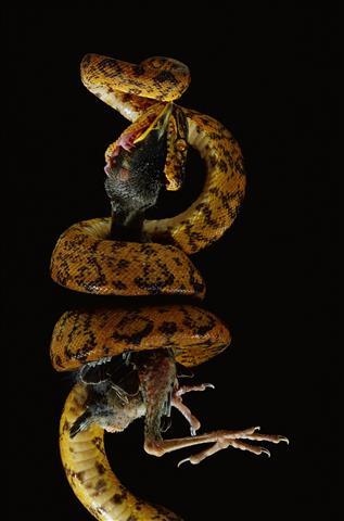 Фотошпалери тварина дикий дикий фауна