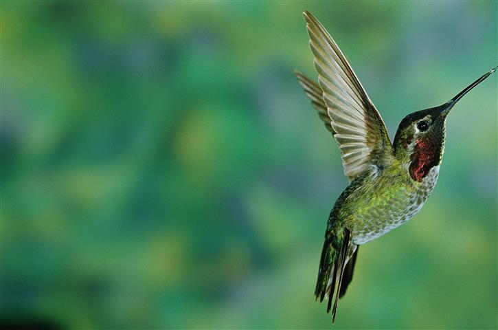 Фотообои птица дикий дикий зеленый