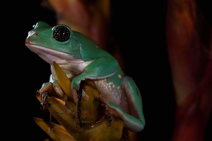 Фотошпалери жаба земноводне земноводне фауна