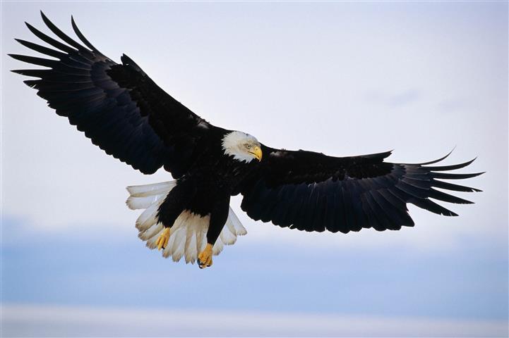 Фотообои птица дикий дикий фауна