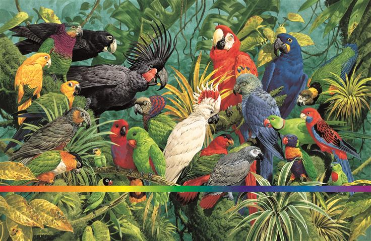 Фотошпалери птах, ара, ара, різнокольоровий