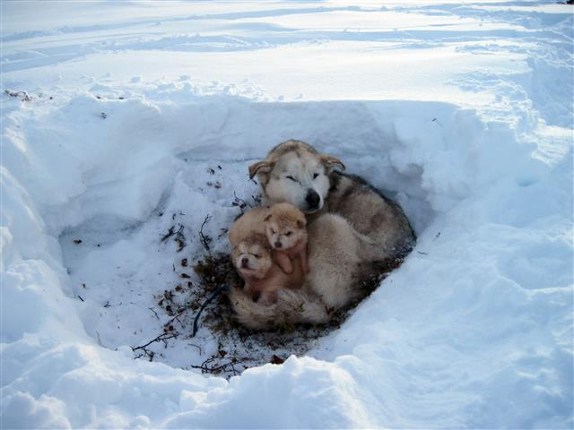 Фотообои щенок снег снег любовь