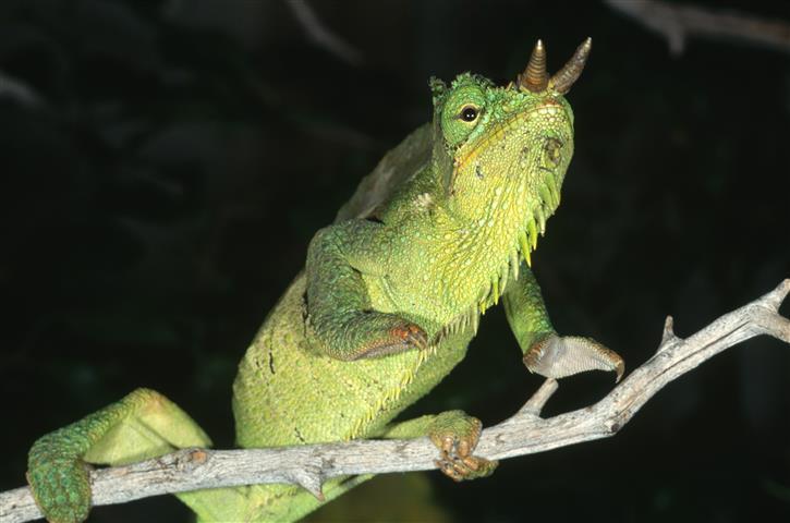 Фотообои земноводное лягушка лягушка зеленый
