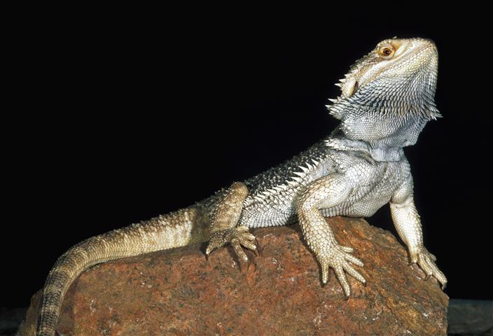Фотообои рептилия земноводное земноводное фауна