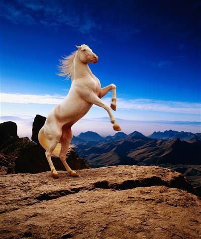 Фотообои животное конь конь скакать