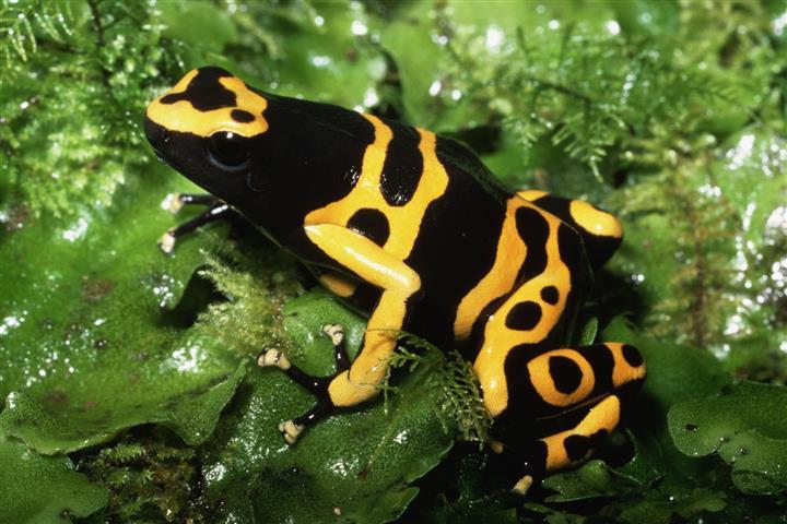 Фотошпалери жаба земноводне земноводне різнокольоровий