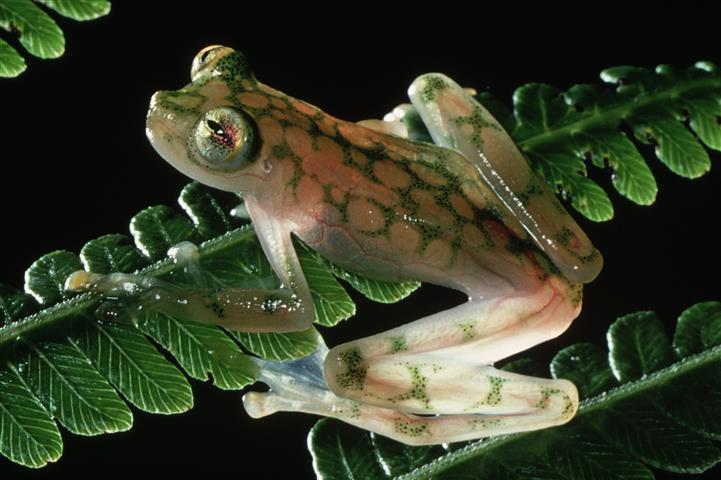 Фотошпалери жаба, дикий, дикий, зелений