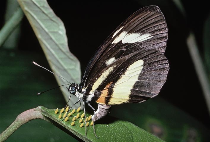 Фотообои бабочка природа природа фауна