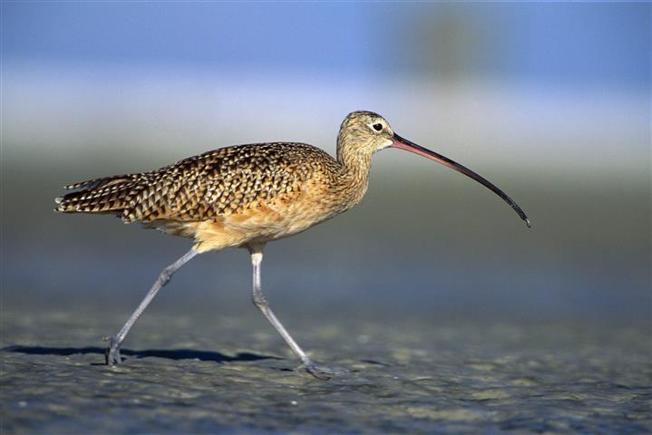 Фотообои птица длинный длинный фауна