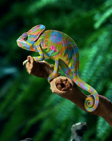 Фотошпалери рептилія дикий дикий різнокольоровий