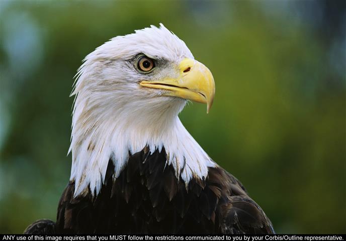Фотообои птица, дикий, дикий, хищник