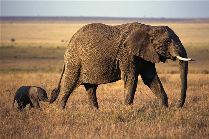 Фотообои слоненок африка африка саванна