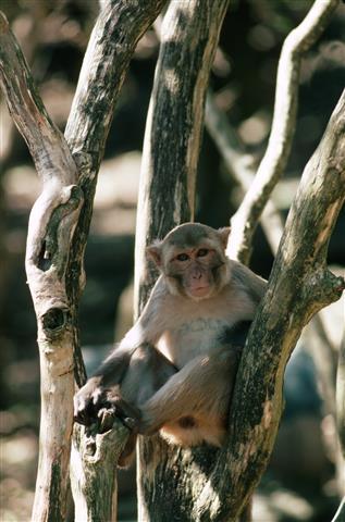 Фотообои животное дикий дикий фауна