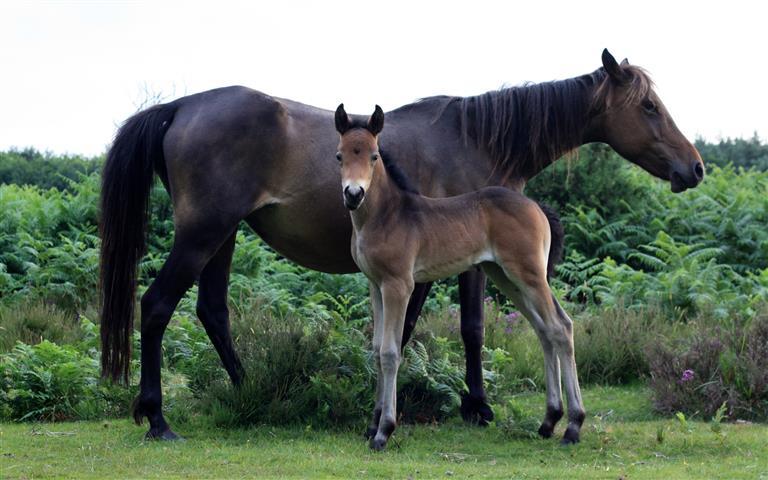 Фотошпалери тварина кінь кінь пара