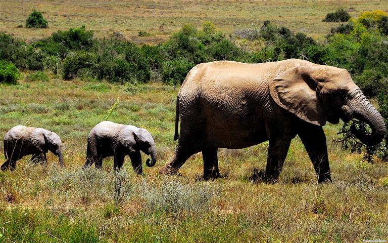 Фотошпалери слоненя дикий дикий кохання