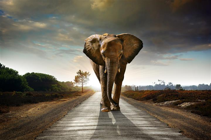 Фотошпалери тварина дорога дорога великий