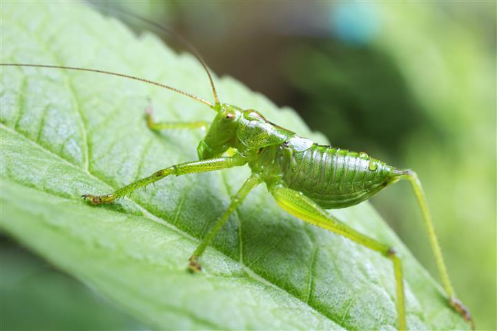 Фотошпалери комаха листя листя зелений