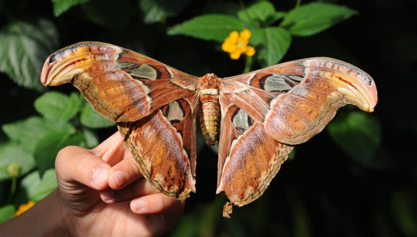 Фотошпалери метелик дикий дикий фауна