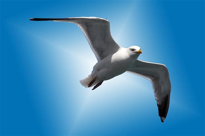 Фотошпалери птах дикий дикий Сині