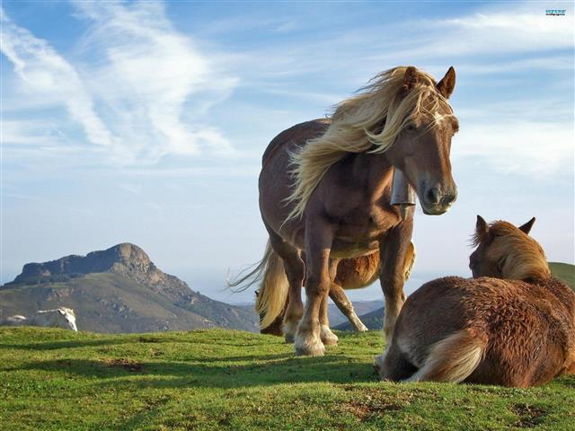 Фотообои животное конь конь пастбище