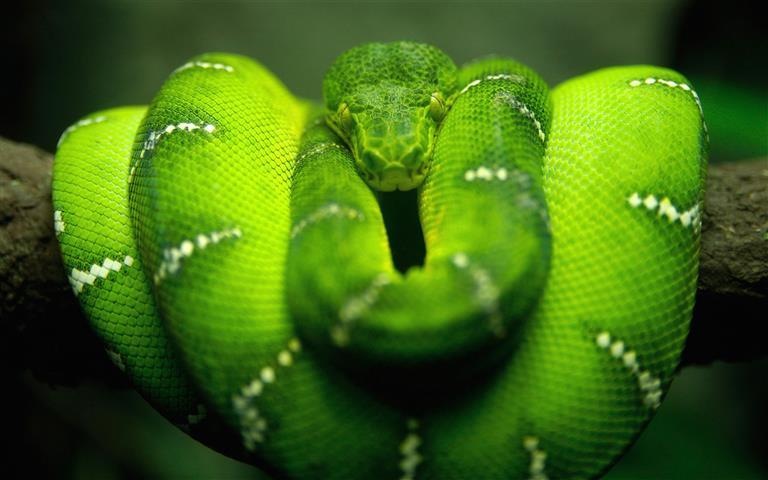 Фотошпалери тварина дикий дикий зелений